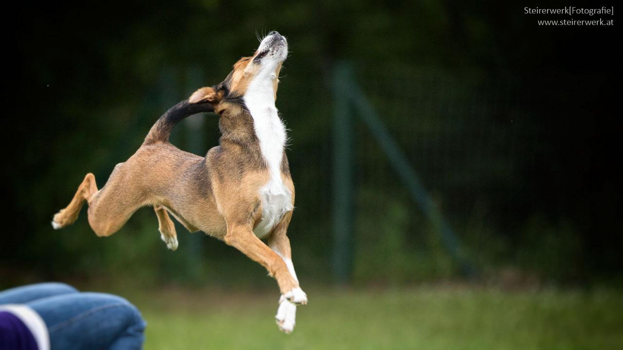 Beliebte Hunderassen Instagram