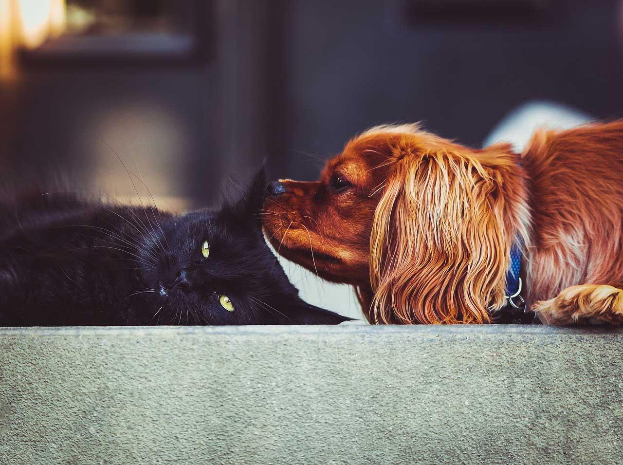 So funktioniert das Zusammenleben zwischen Hund & Katze