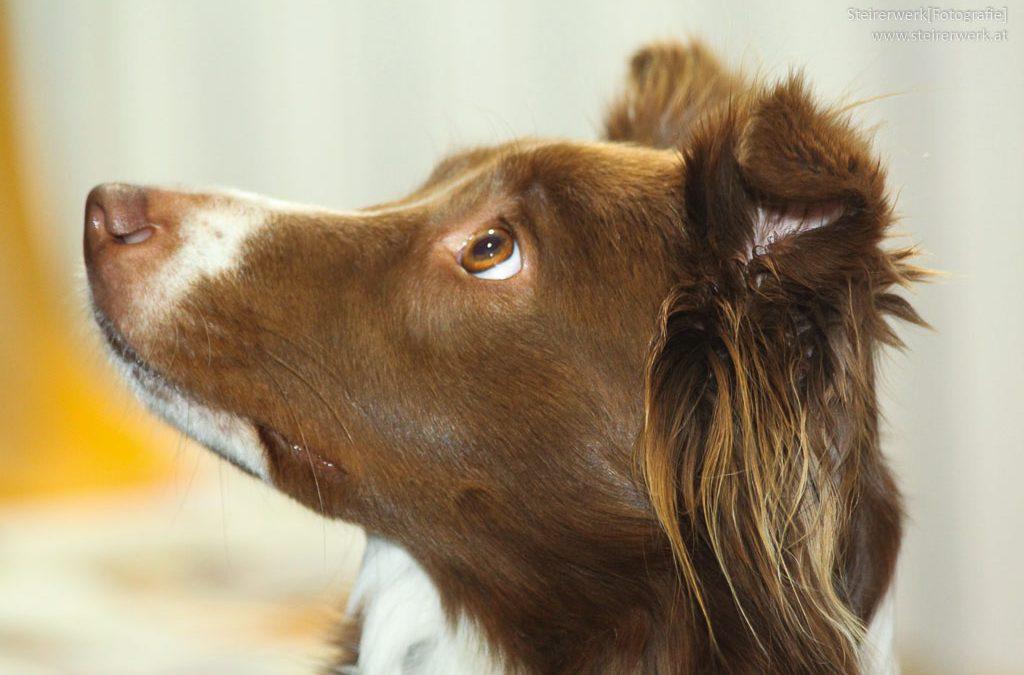 Hundeverhalten richtig verstehen