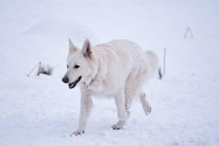 Hund in der kalten Jahreszeit