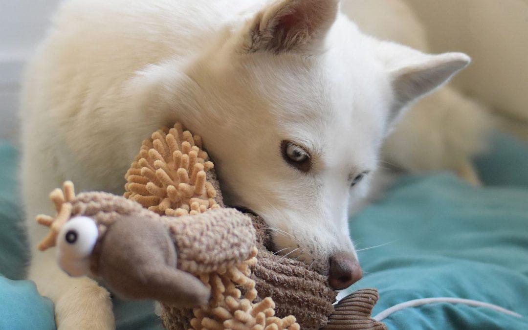 Hunde nach Ausgangsbeschränkungen rechtzeitig auf gewohnte Routine vorbereiten